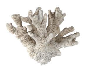 Sango Korallen Pulver Dosierung Wirkung Anwendung