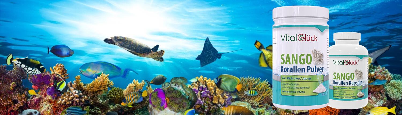 sango-meeres-korallen-kaufen